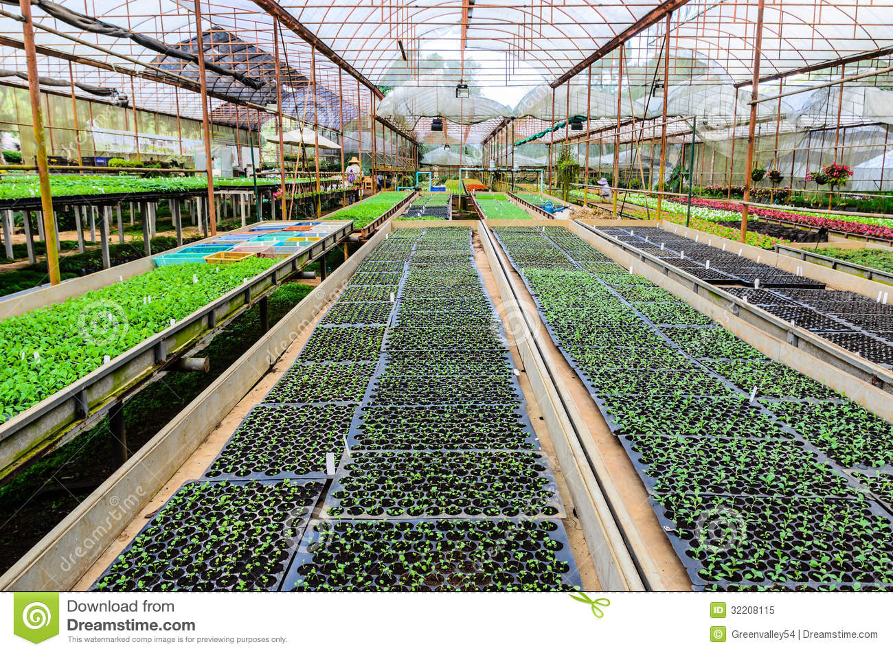 PLANT NURSERY OF FLOWERS AND ORNAMENTAL PLANTS Stock Image - Image ...