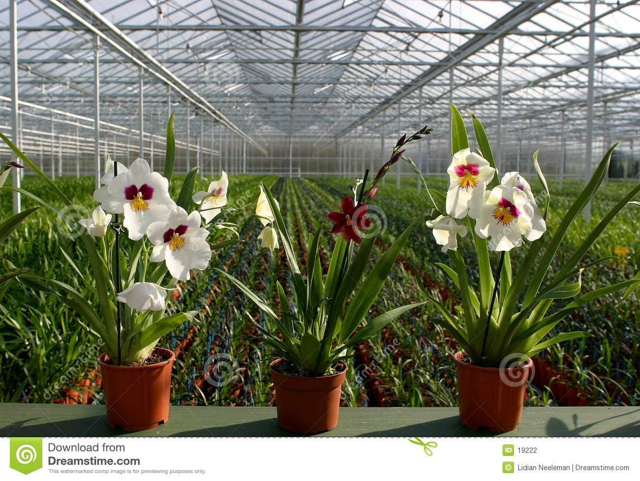 Plant Nursery orchids Stock graphy Image