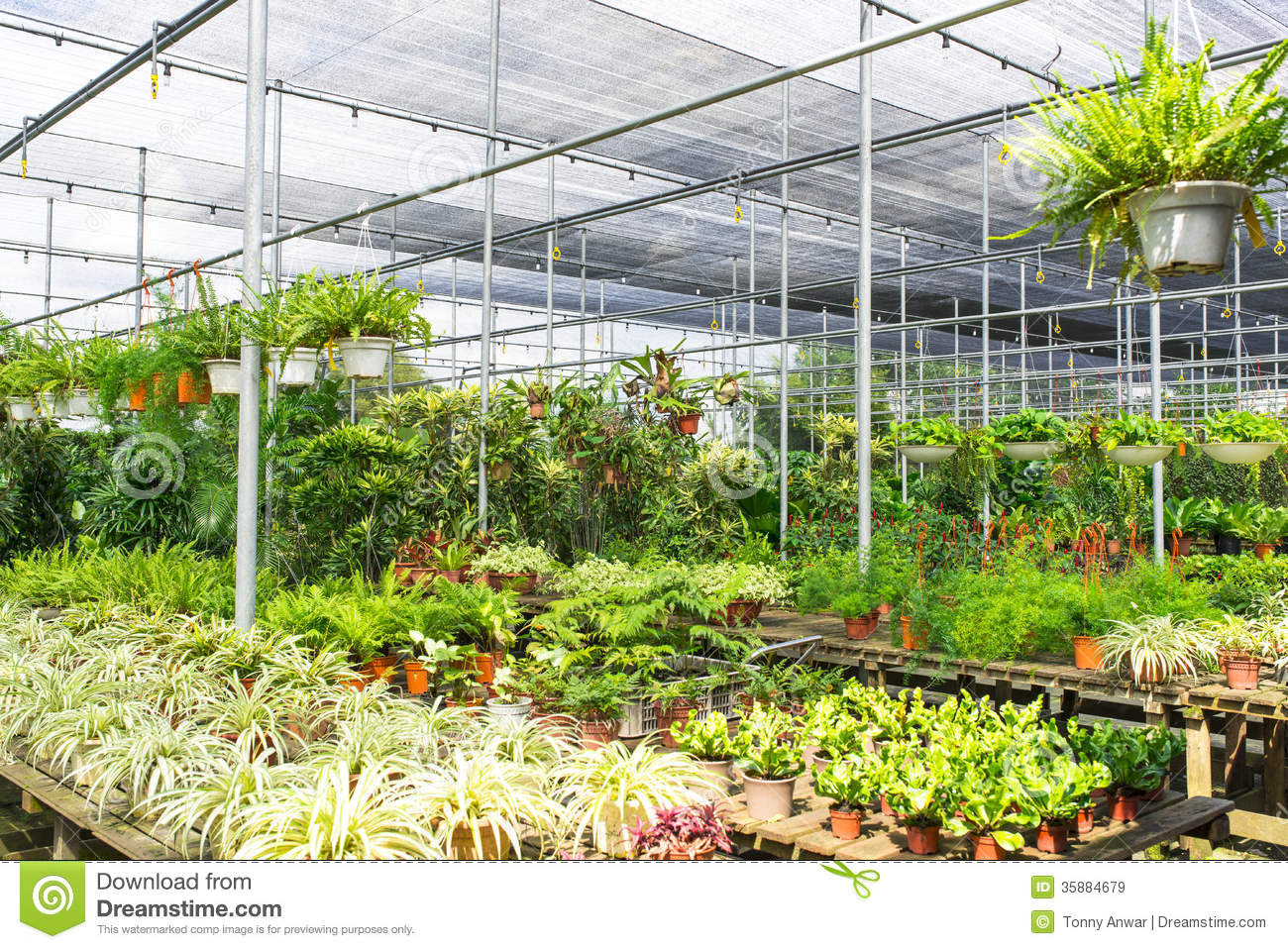Plant nursery royalty free stock images image 35884679 for Plant nursery
