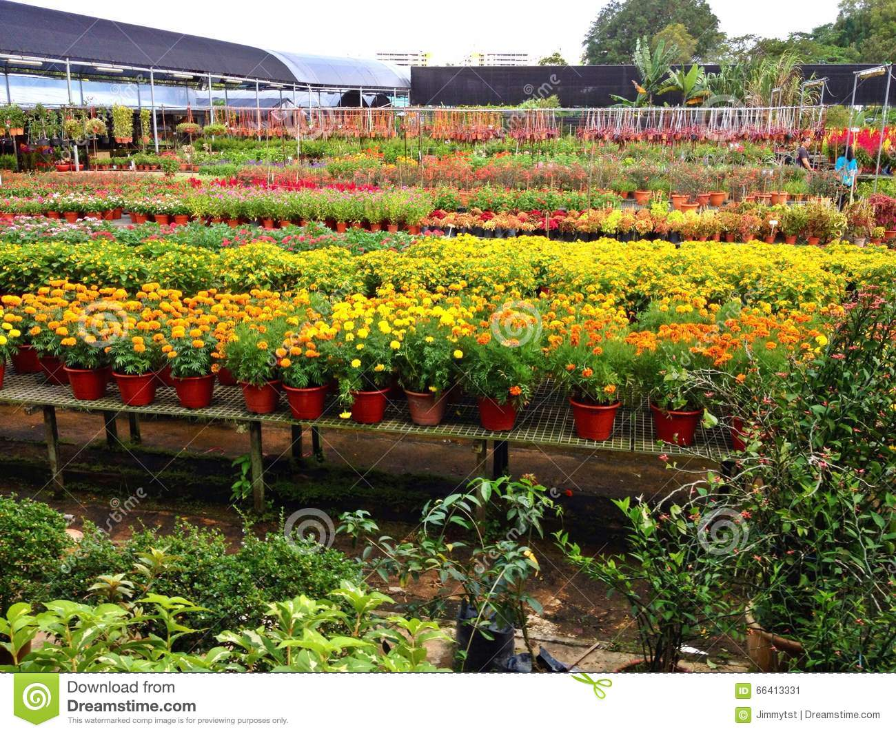 Plant nursery stock photo image 66413331 for Plant nursery