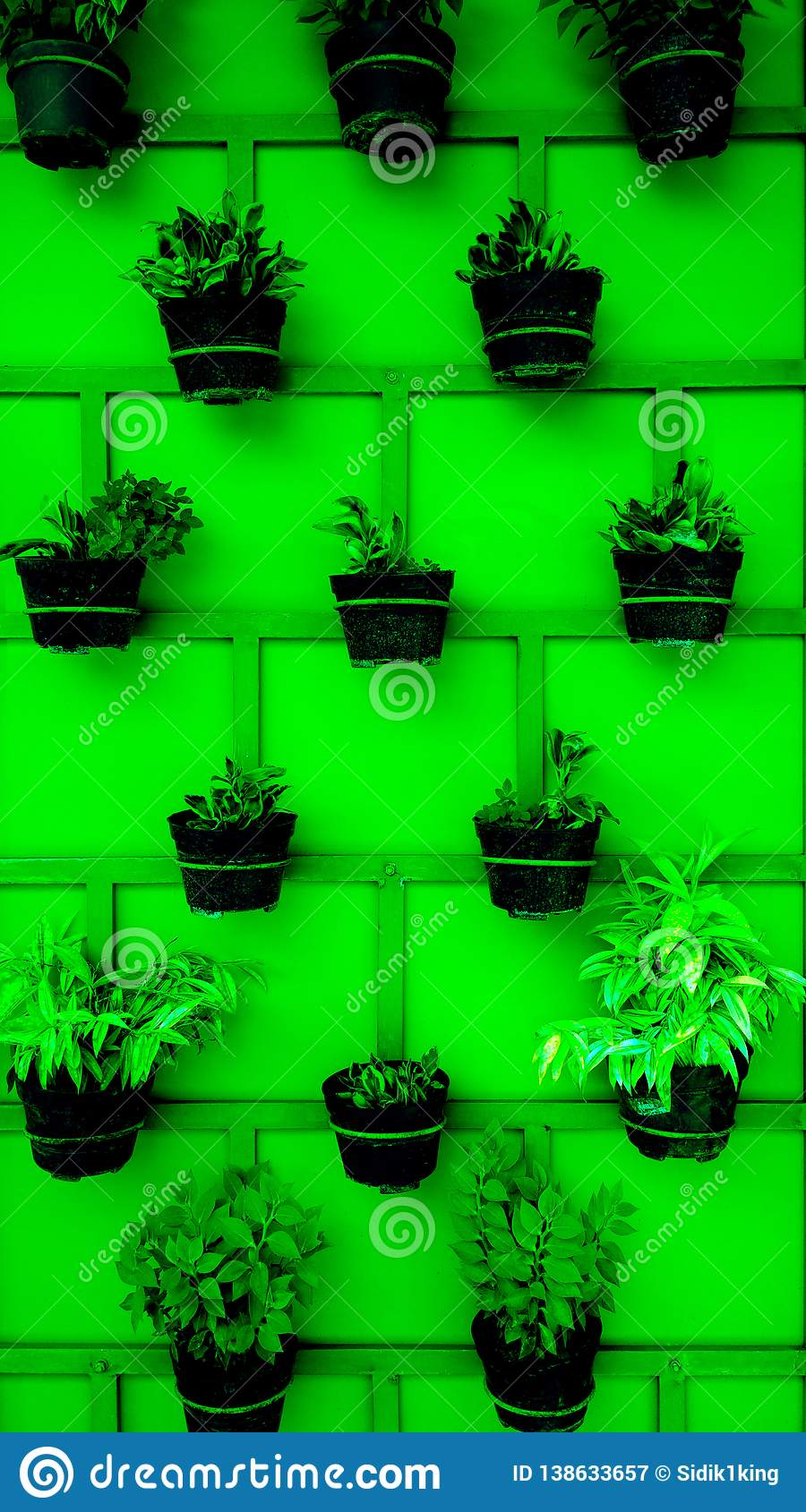 Plant pots neatly arranged on the wall.