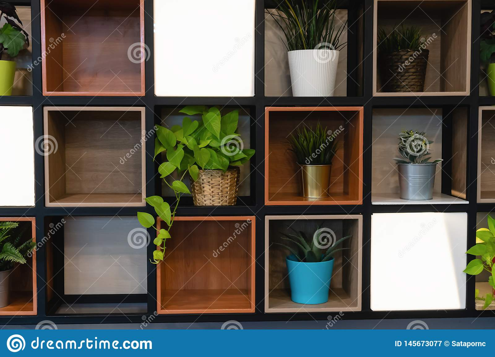 Plant pots placed on the wooden shelf attached to the wall
