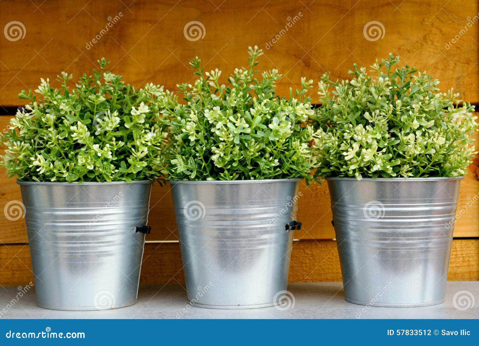 Delicieux Plant Pots