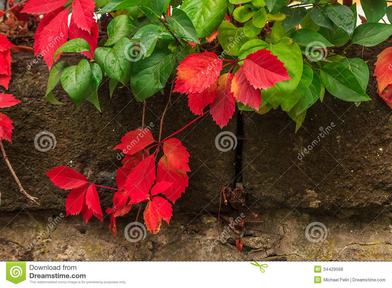 plant with red and green leaves on stone wall royalty free stock, Natural flower