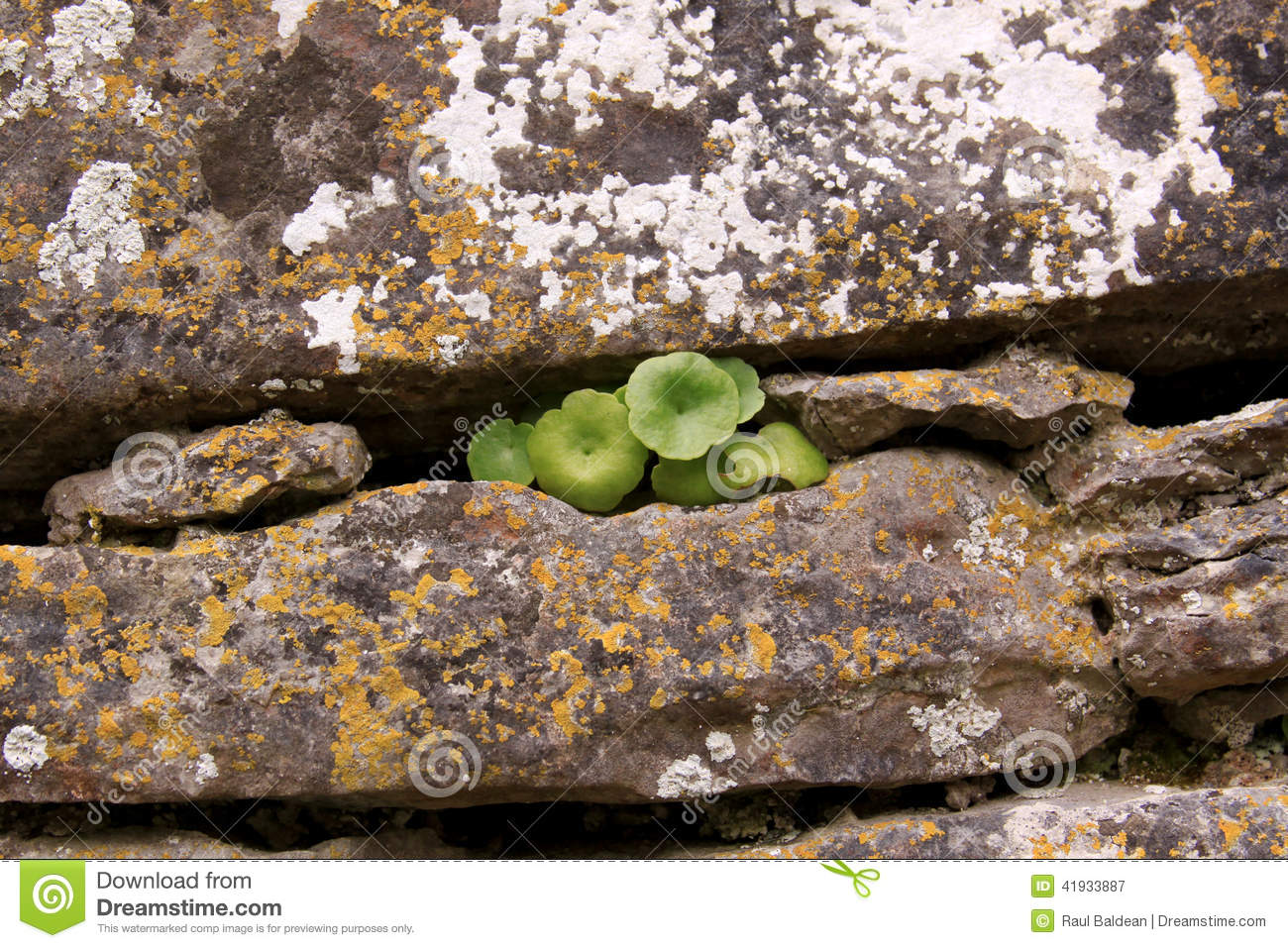 Plant and rock
