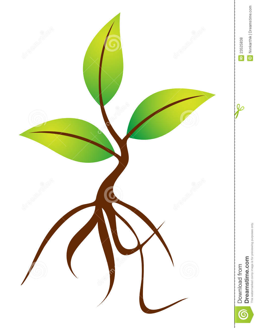 Plant With Roots Royalty Free Stock Photos - Image: 23525838