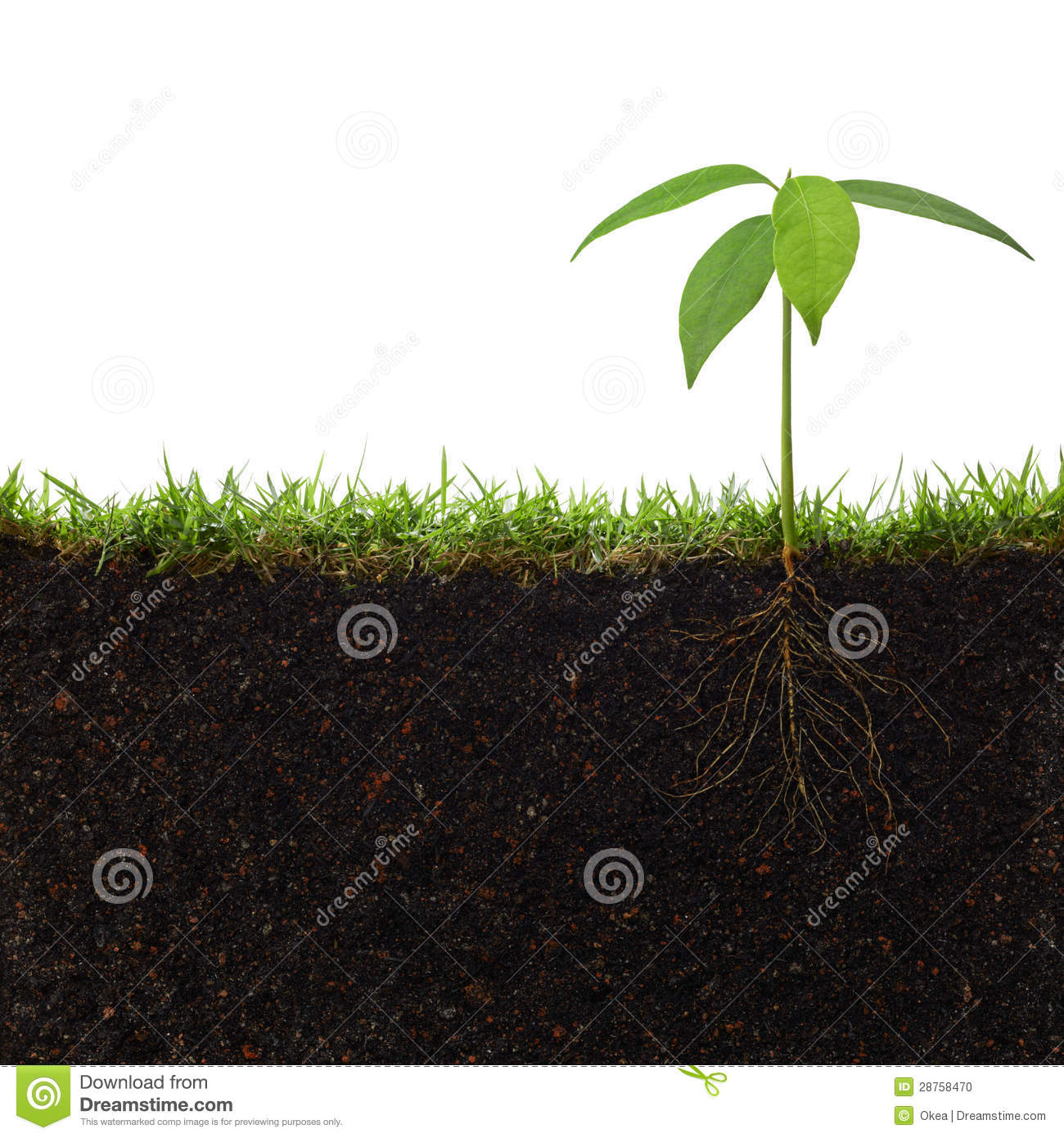 Plant With Roots Stock Photo. Image Of Sowing