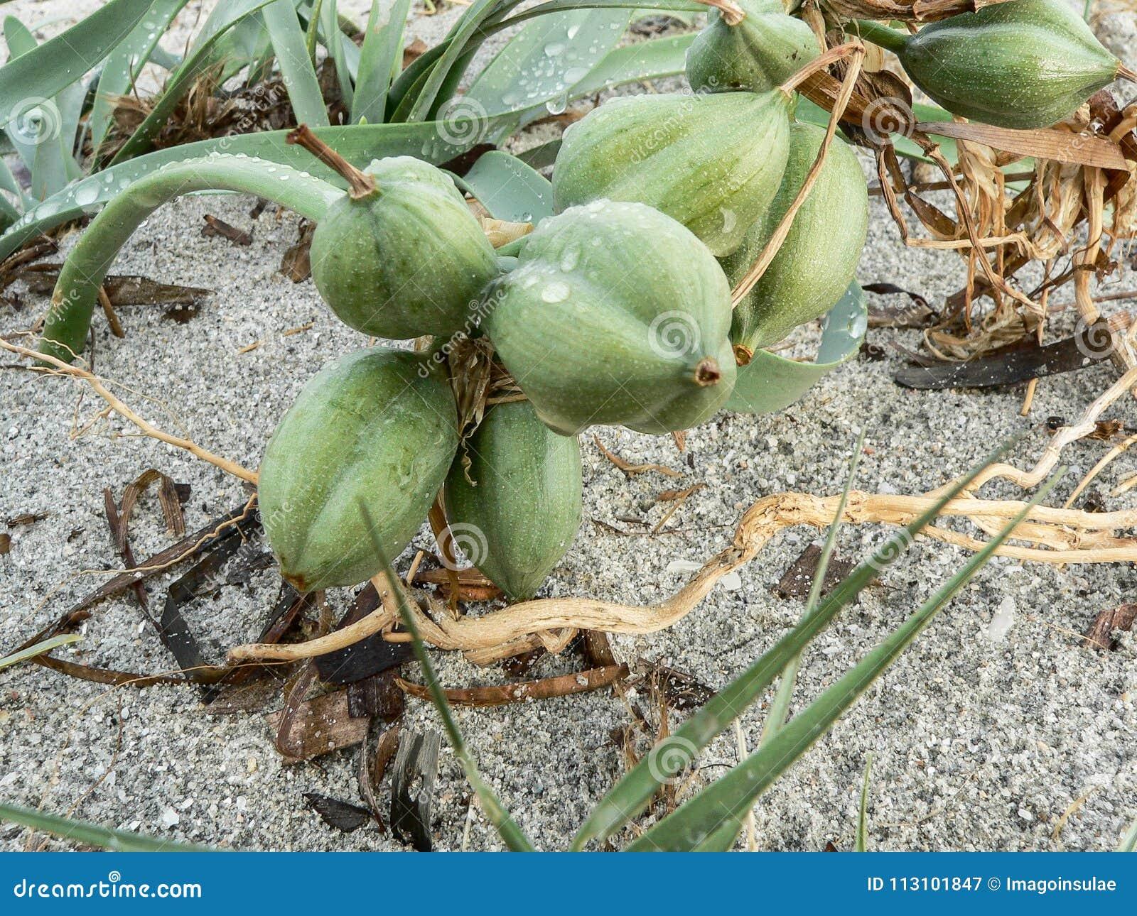 Ecosystems. Coastal sand dunes