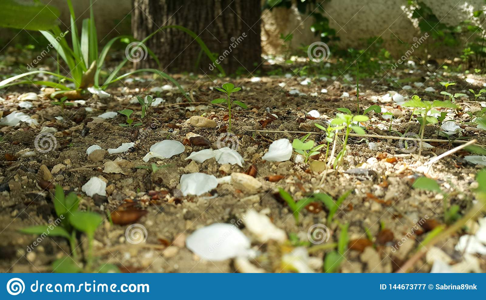 Plant soil forest