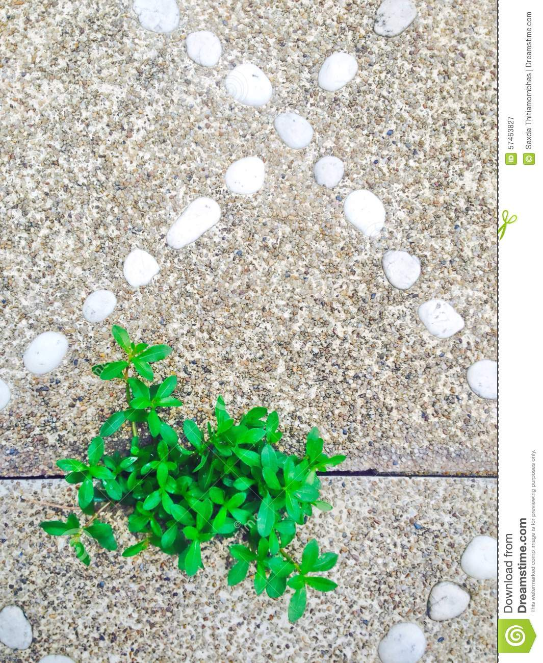 Plant and stone stock photo image 57463827 for Green floor plant