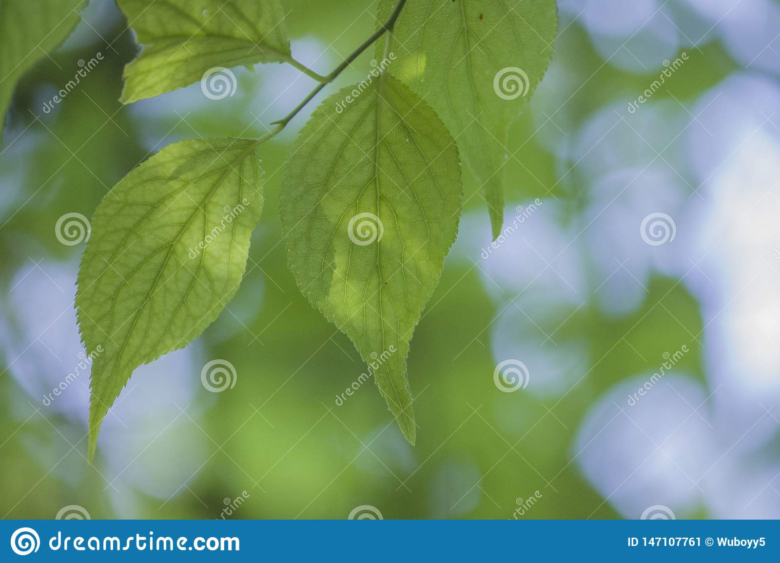 A plant with tender green leaves