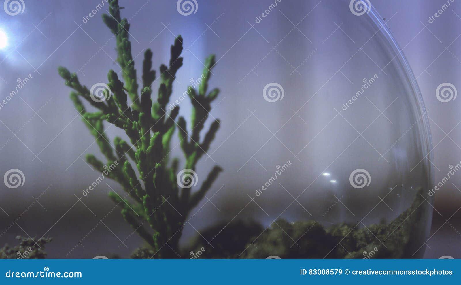Download Plant in terrarium stock image. Image of indoor, interior - 83008579