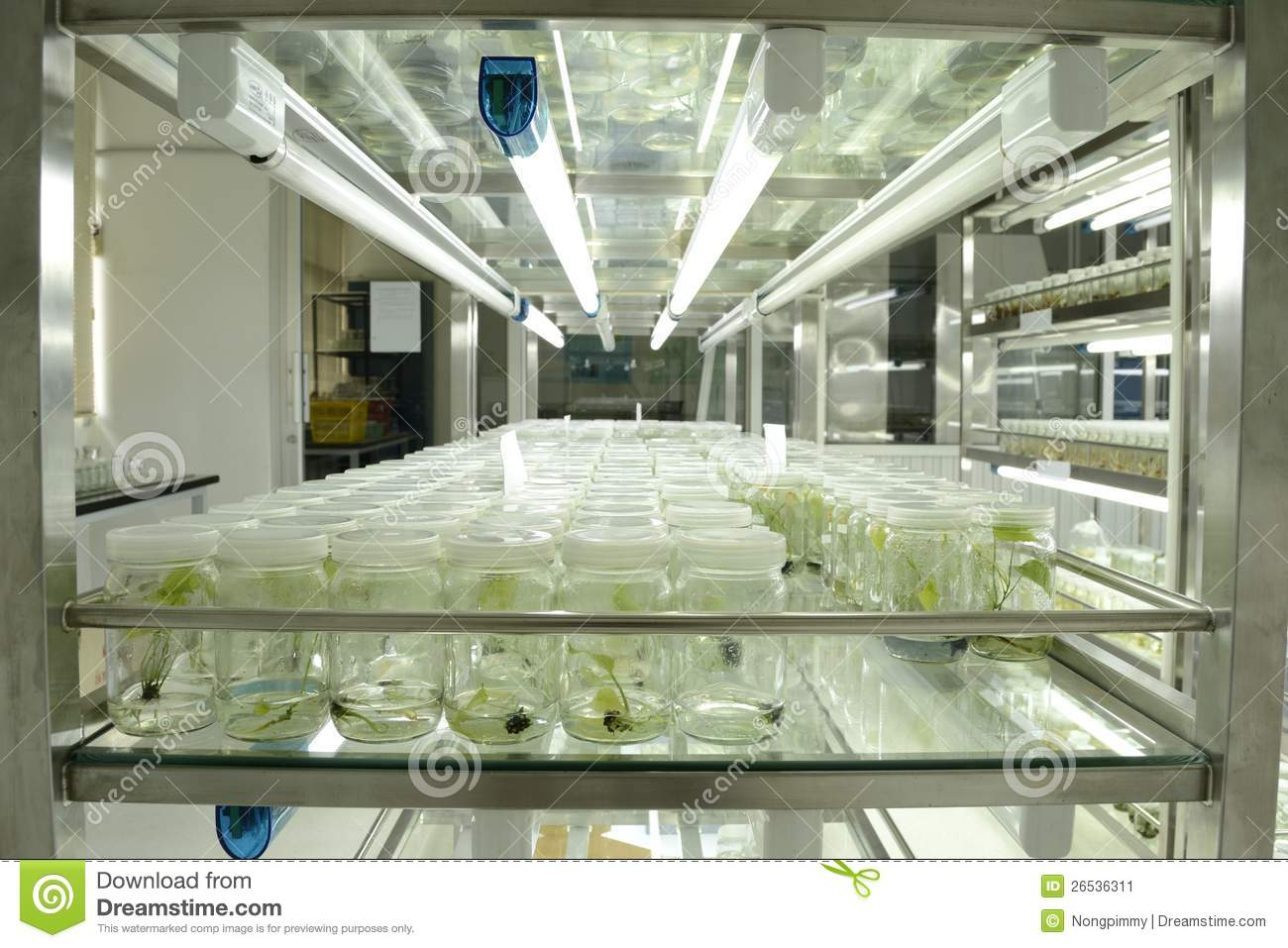 plant tissue culture research papers 2013