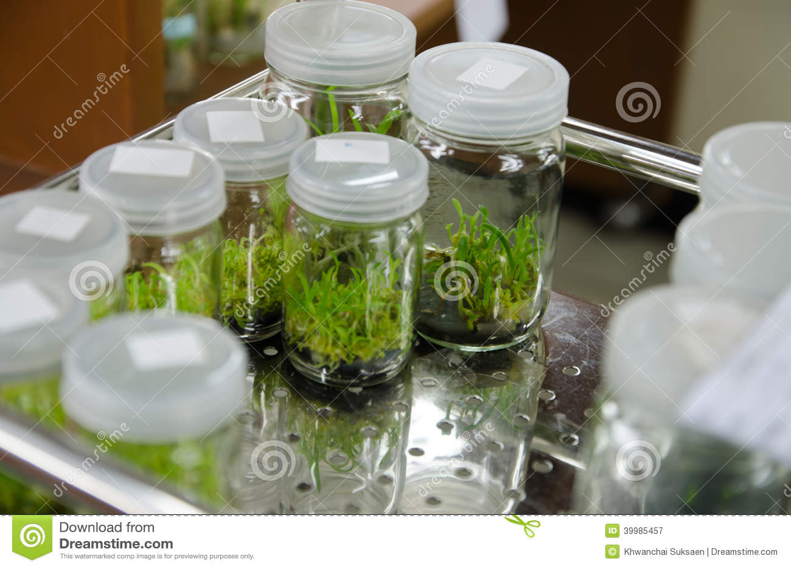 Business plan plant tissue culture lab