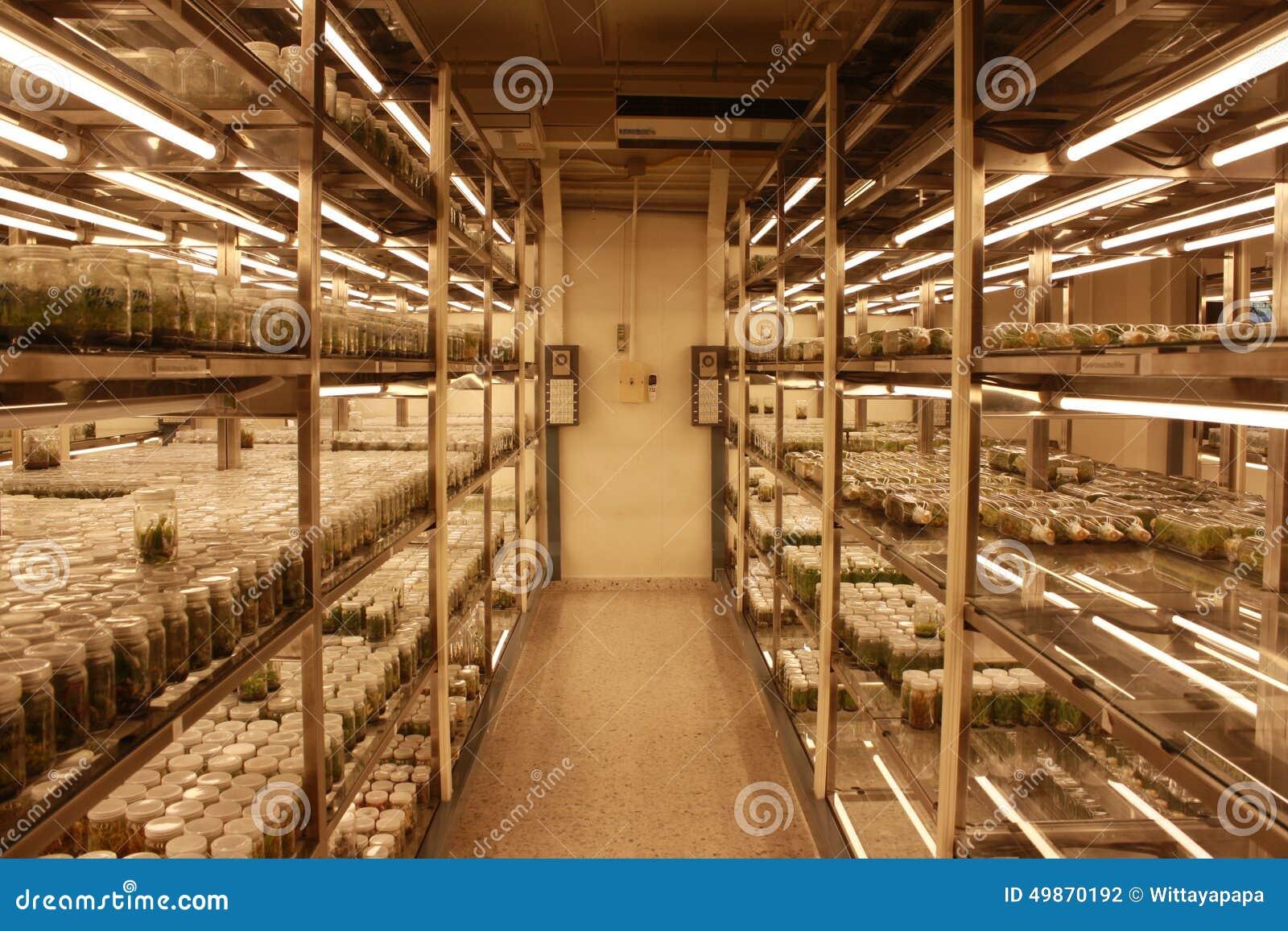 Plant Tissue Culture Room Stock Photo Image 49870192