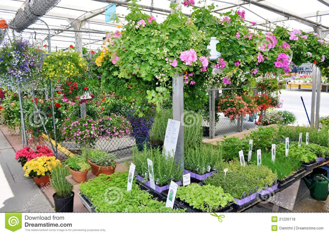 Plant Varieties For Sale Royalty Free Stock Photos Image