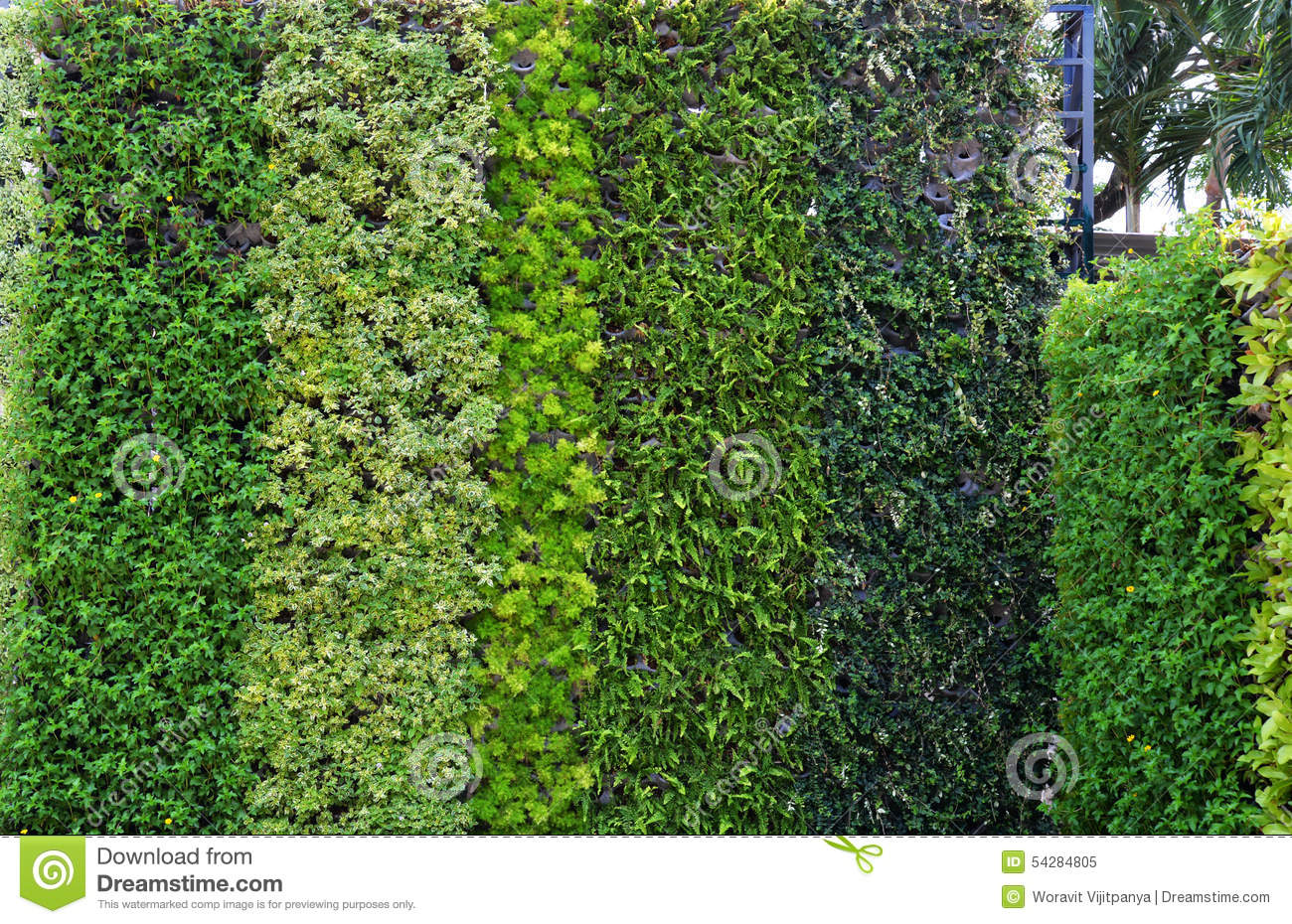 Plant wall in the garden stock image. Image of bush, wall
