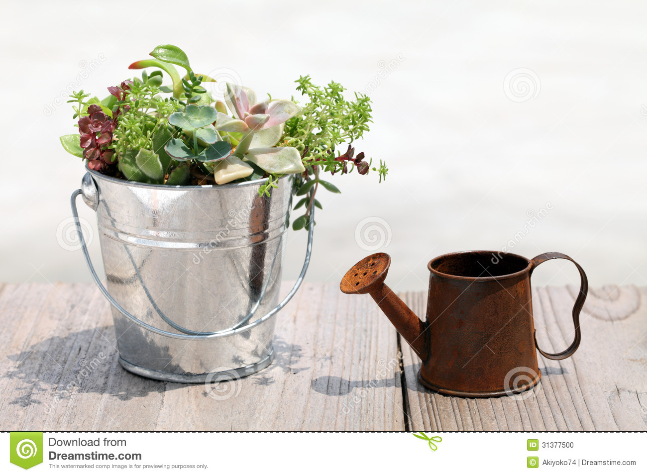 Plant With A Watering Can Stock Photo Image 31377500