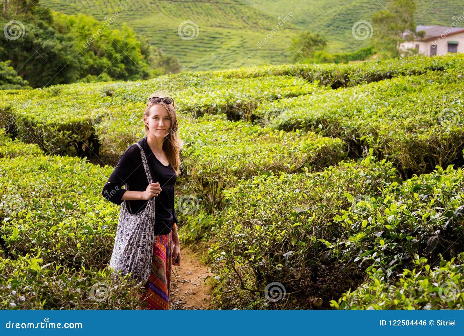 Plantação de chá de Cameron Highlands Bharat