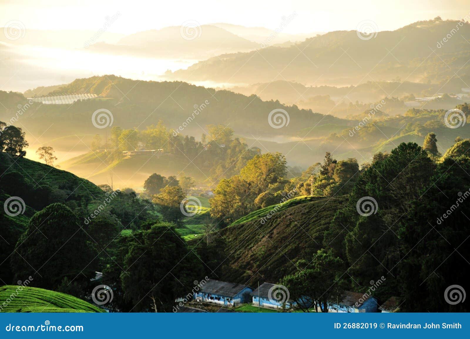 Plantação de chá de Sungai Palas