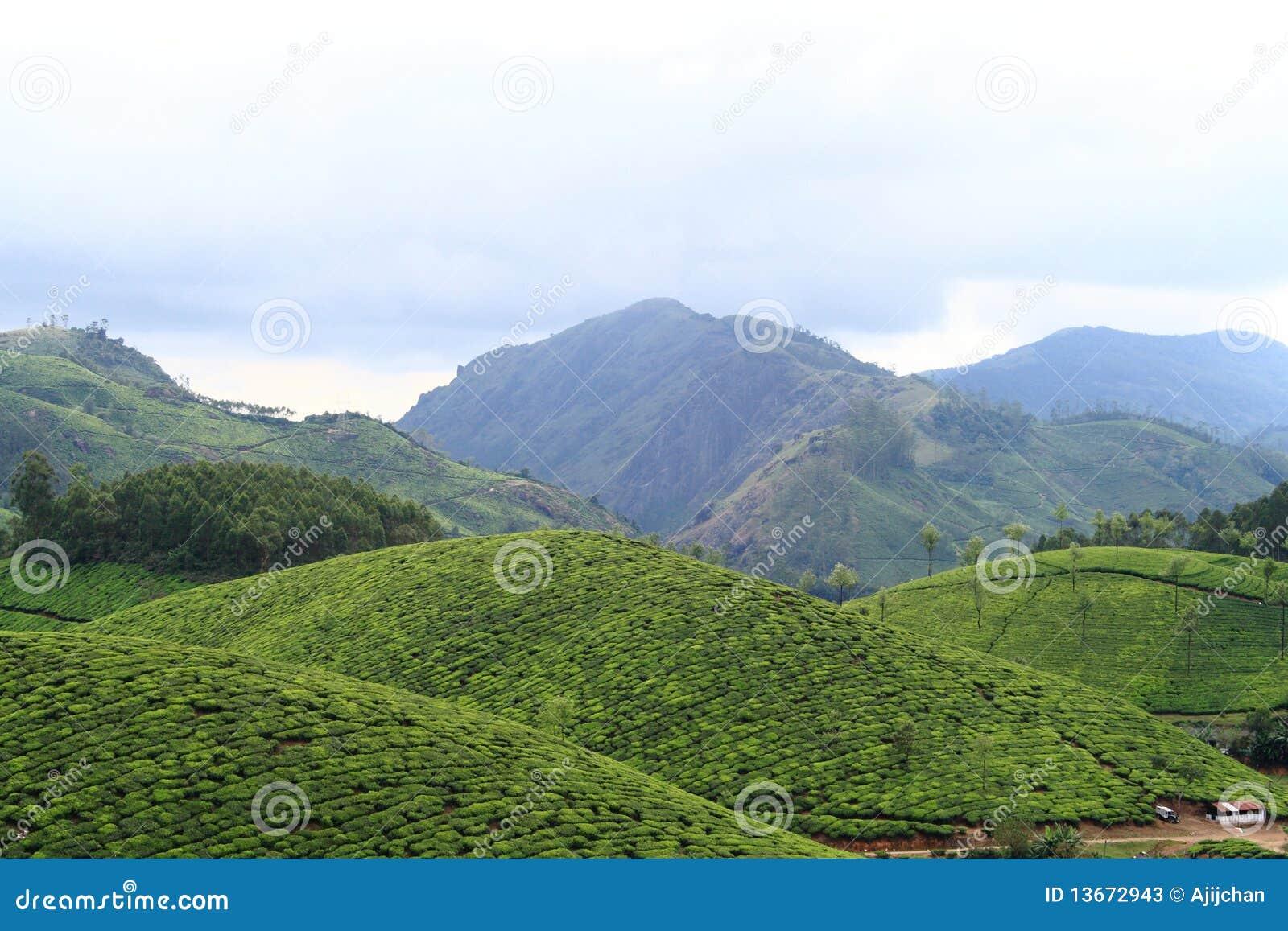 Plantações de chá Munnar