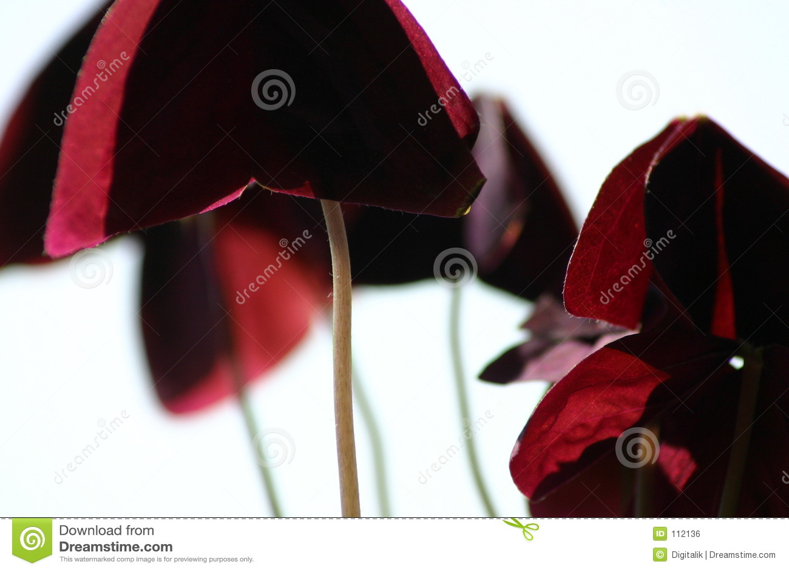 Planta abstrata