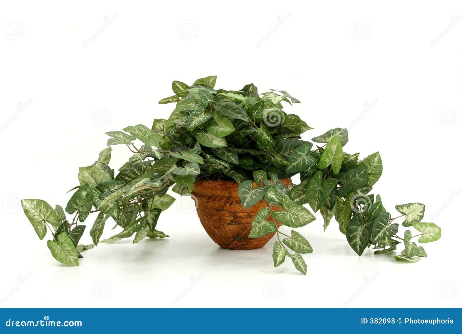 Planta artificial da casa