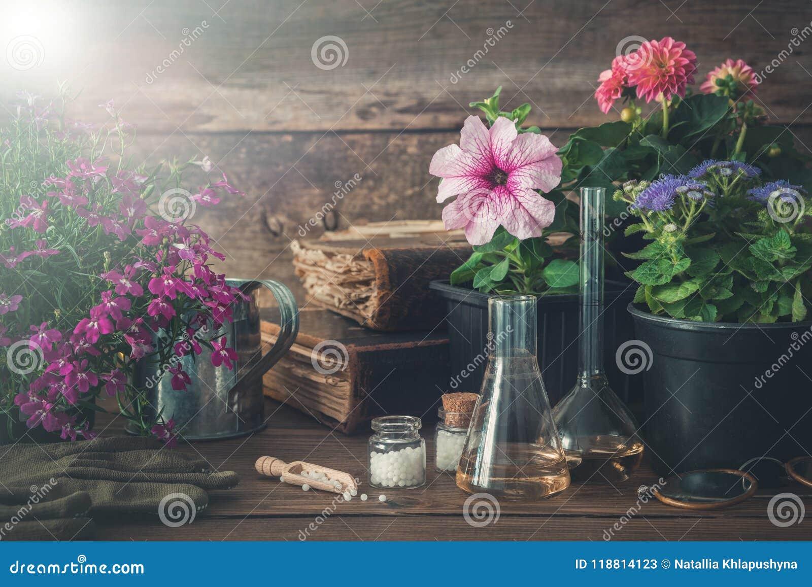 Planta av trädgårds- växter och blommor, gamla böcker och homeopatiska boter för växter