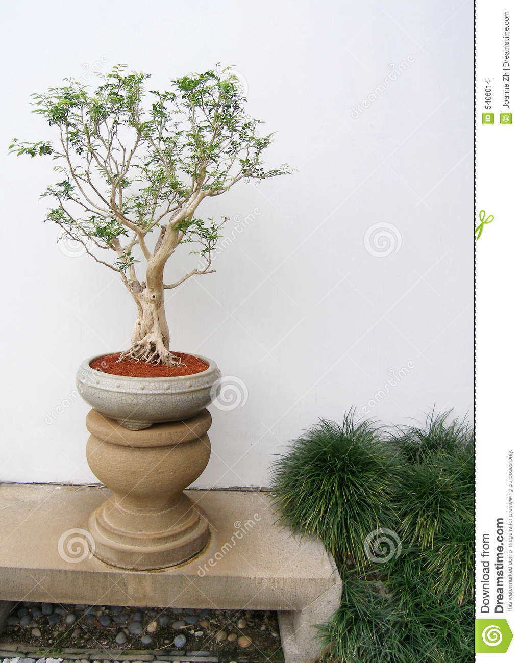 Planta china de los bonsais potted