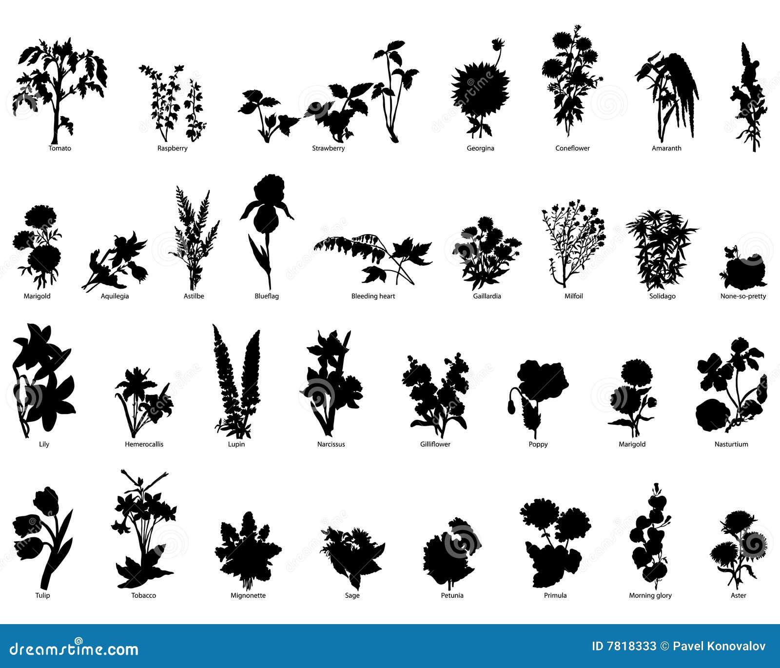 Planta a coleção