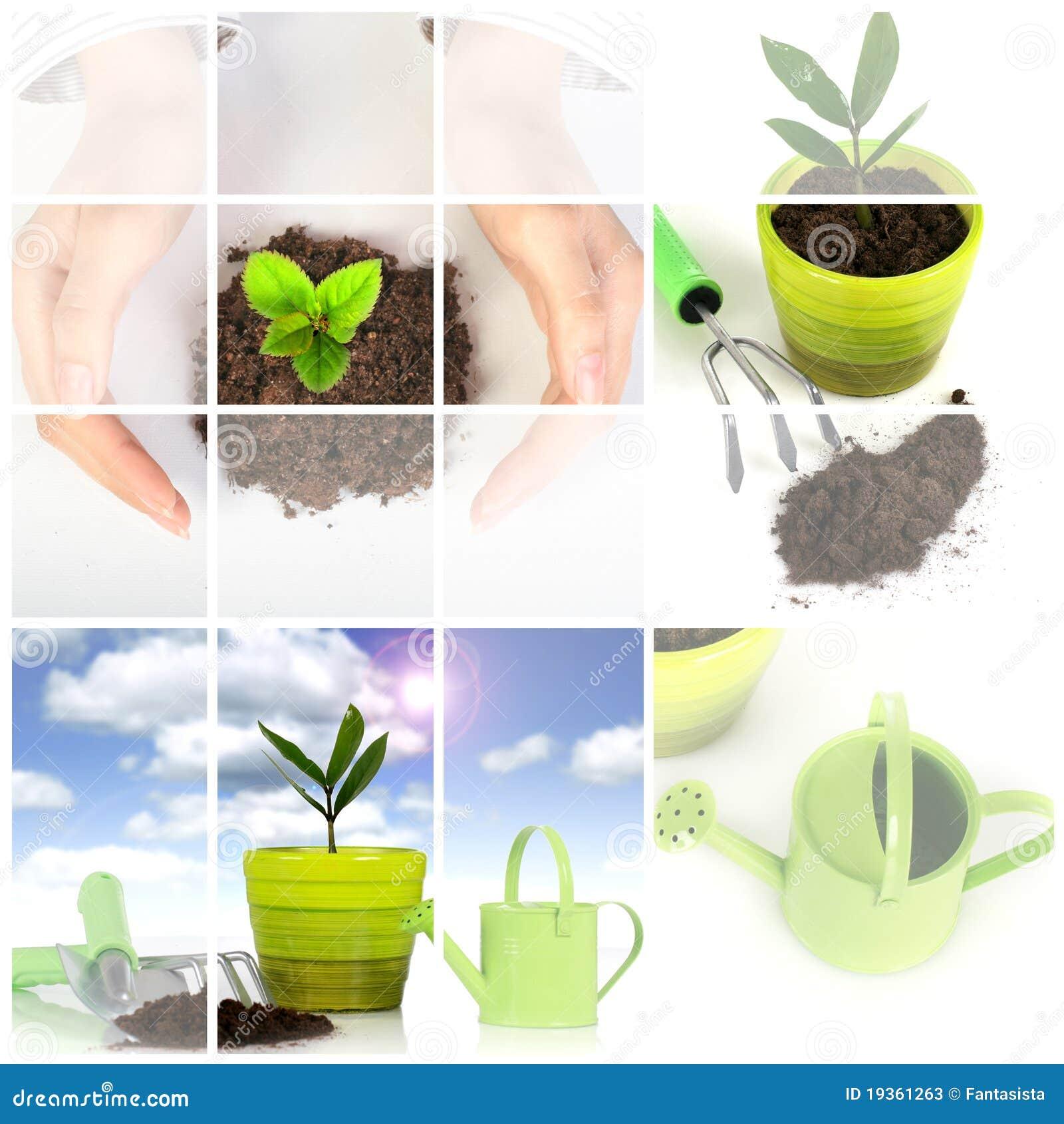 Planta com as ferramentas de jardim isoladas sobre o branco.