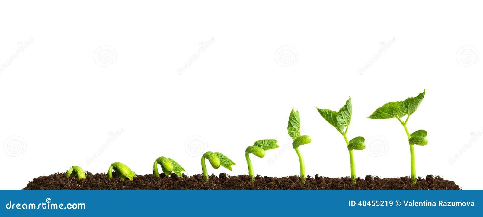 Planta crescente no solo