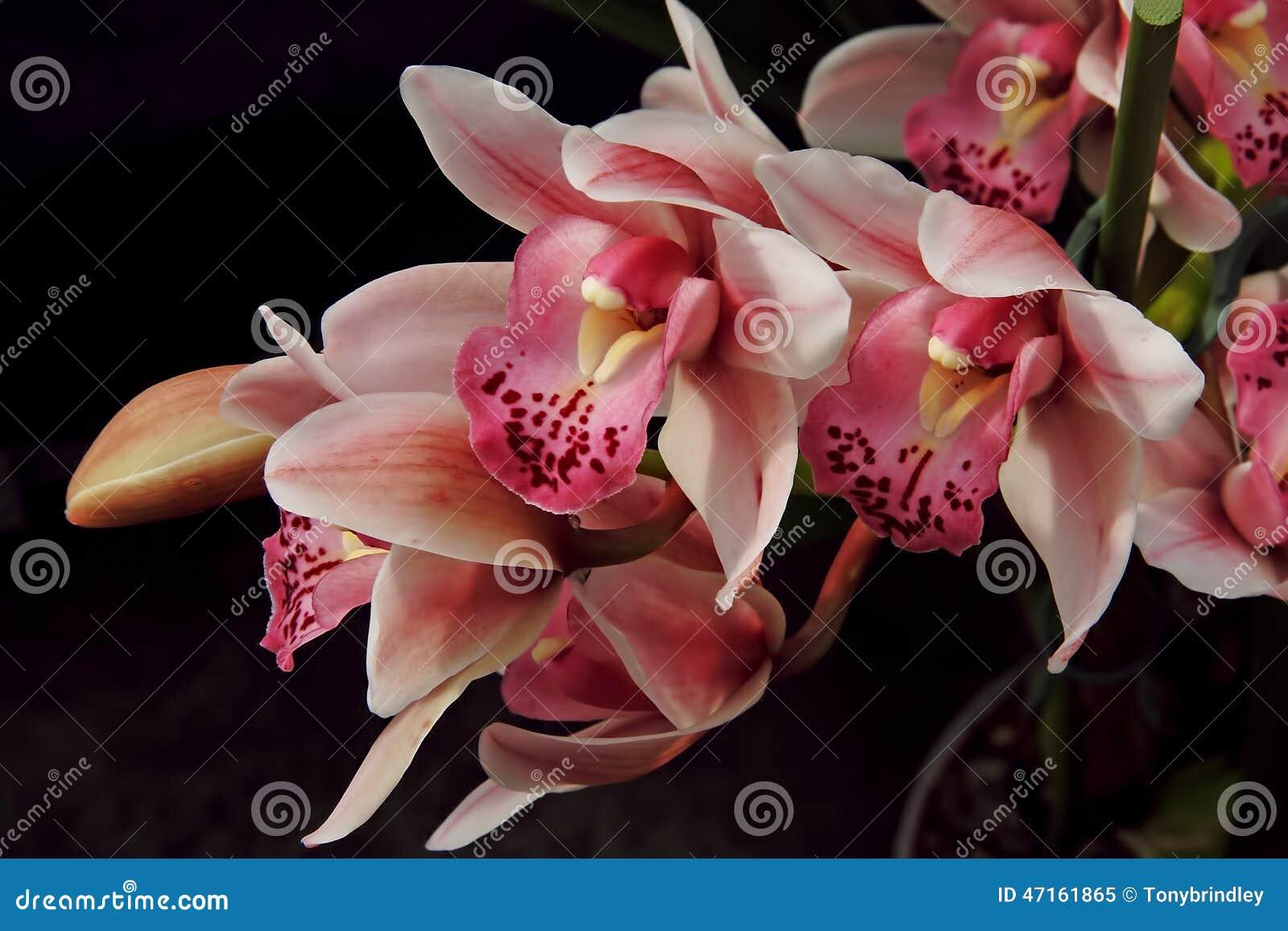 Planta da orquídea