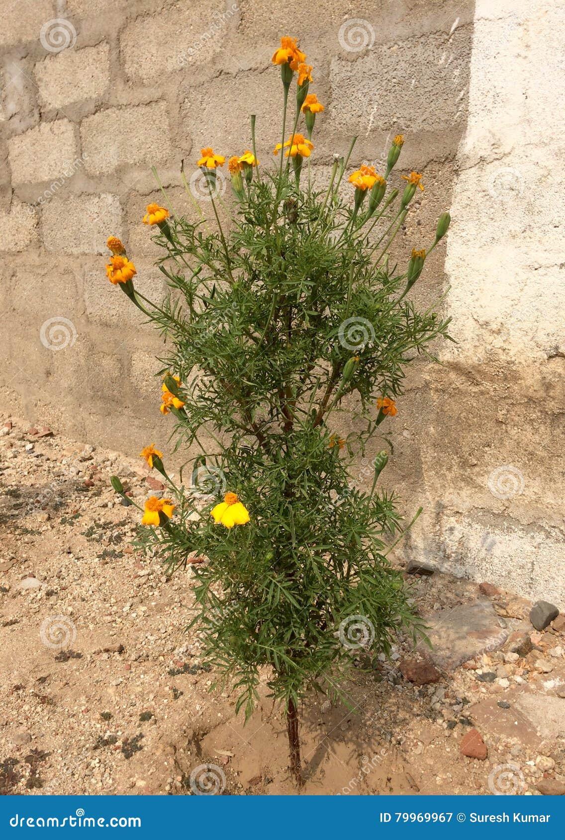 Planta de la flor