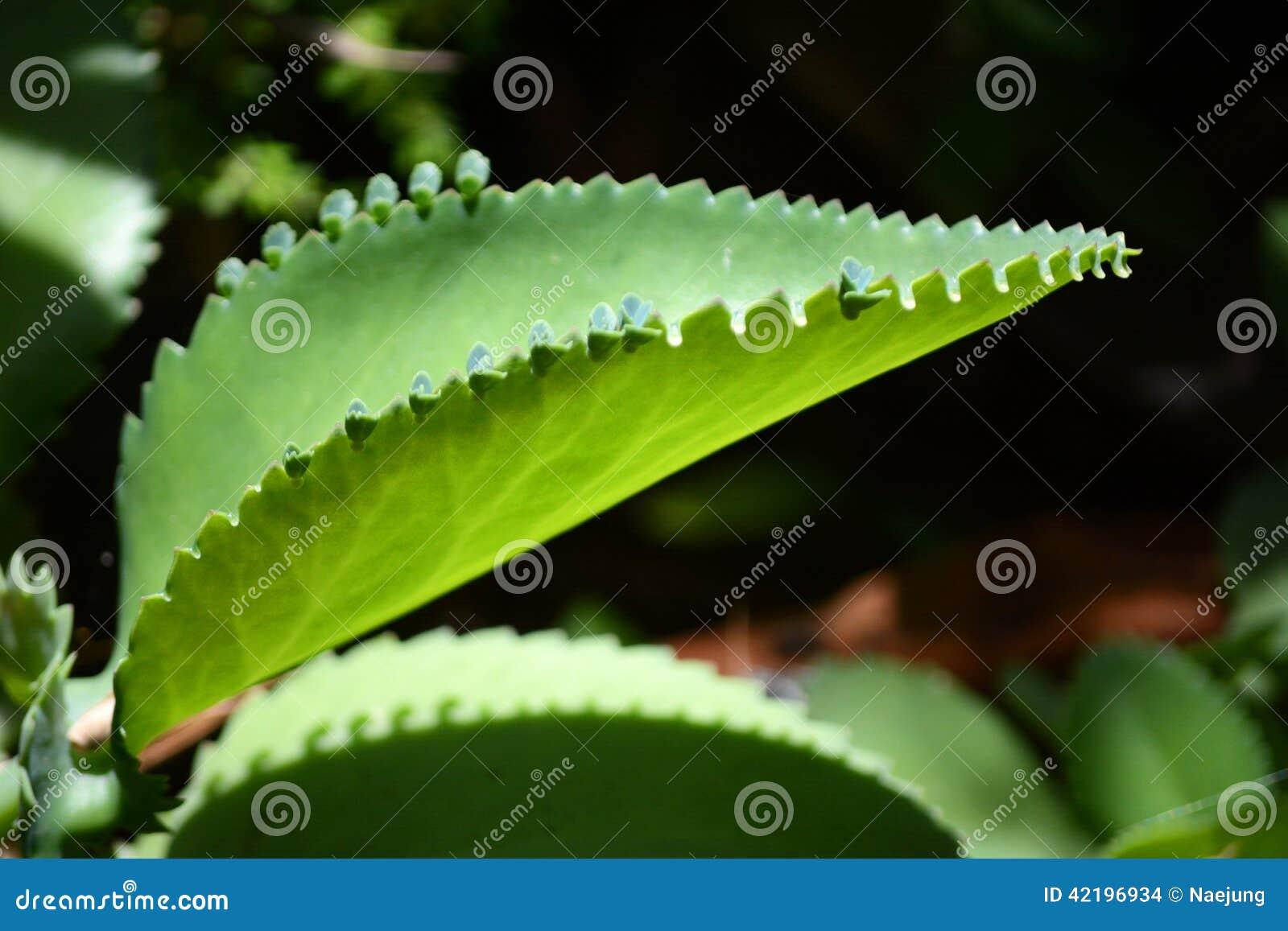 Planta de la vida vegetal de aire foto de archivo imagen for Plantas de aire