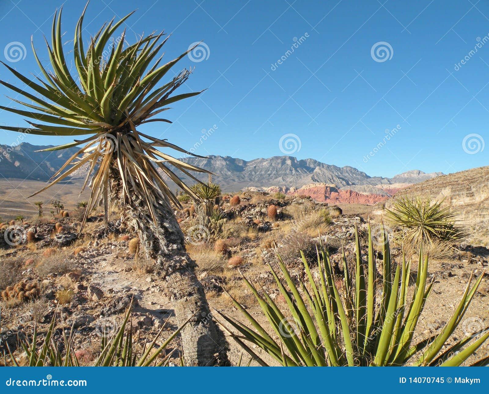 Planta de la yuca foto de archivo libre de regal as for Yuca planta de exterior