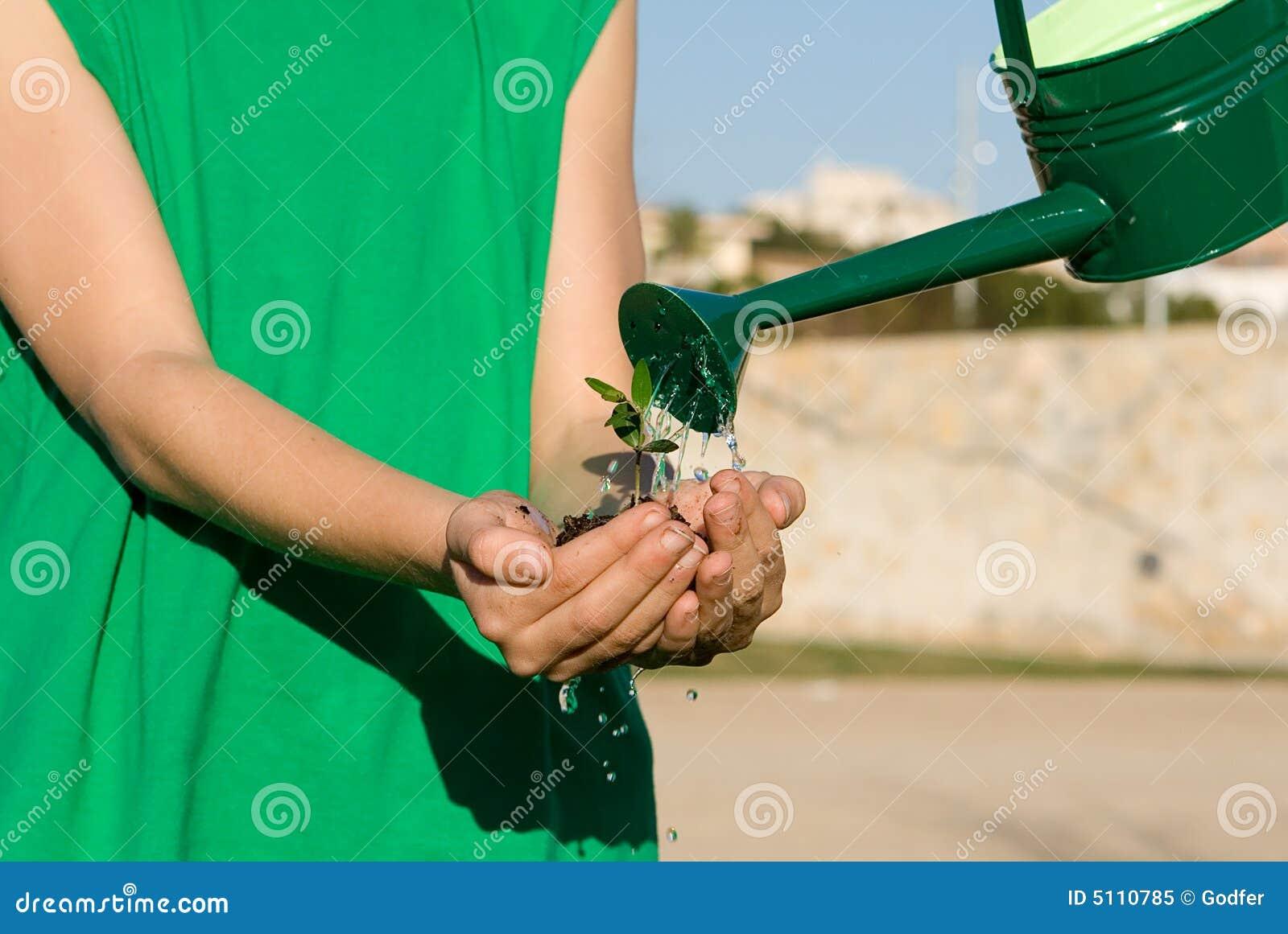 Planta de riego del niño en mano ahuecada