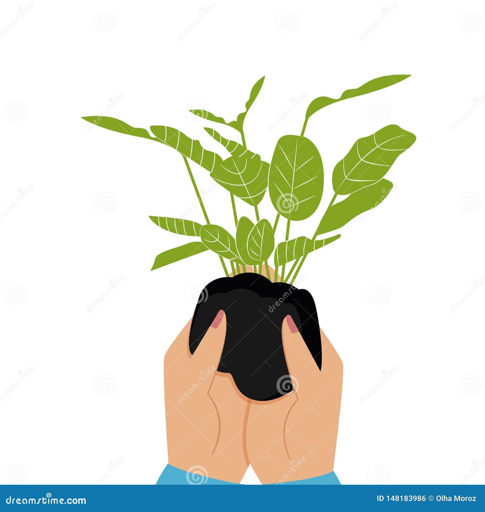 Planta de semillero verde a disposici?n Ejemplo del vector de un estilo plano