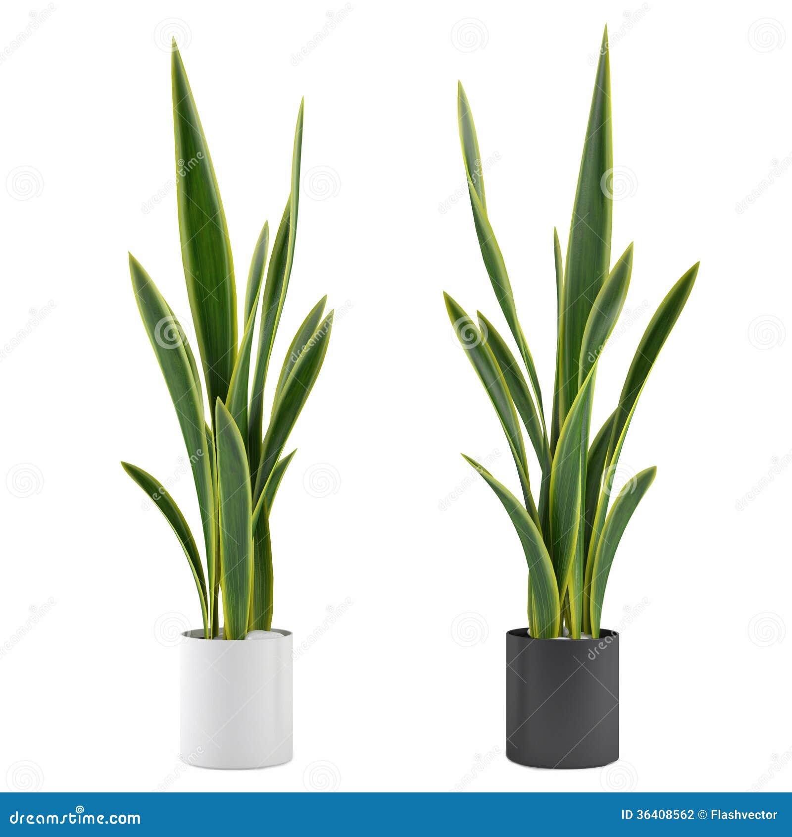planta decorativa da grama no vaso de flores ilustra o
