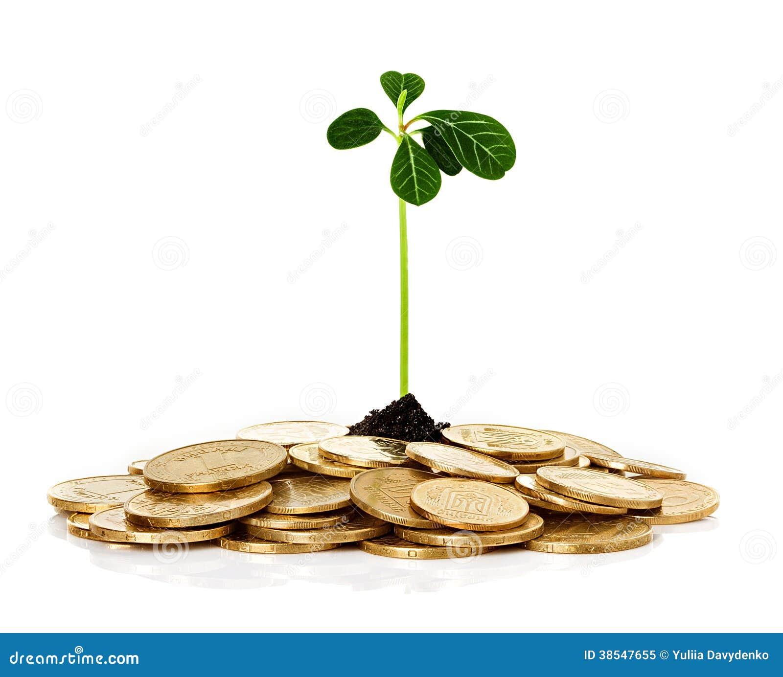 Planta del brote que brota de monedas