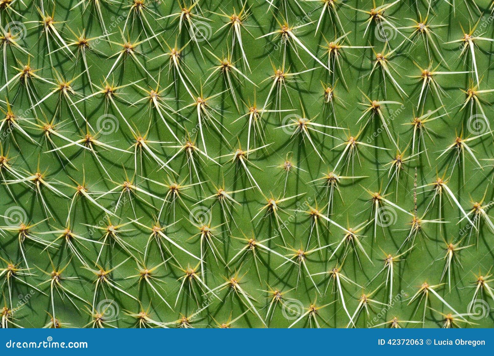 Planta del cactus en el desierto de México