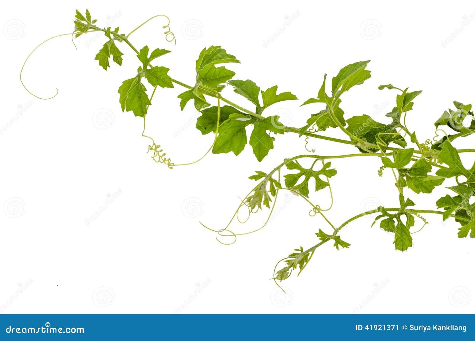 Planta del escalador