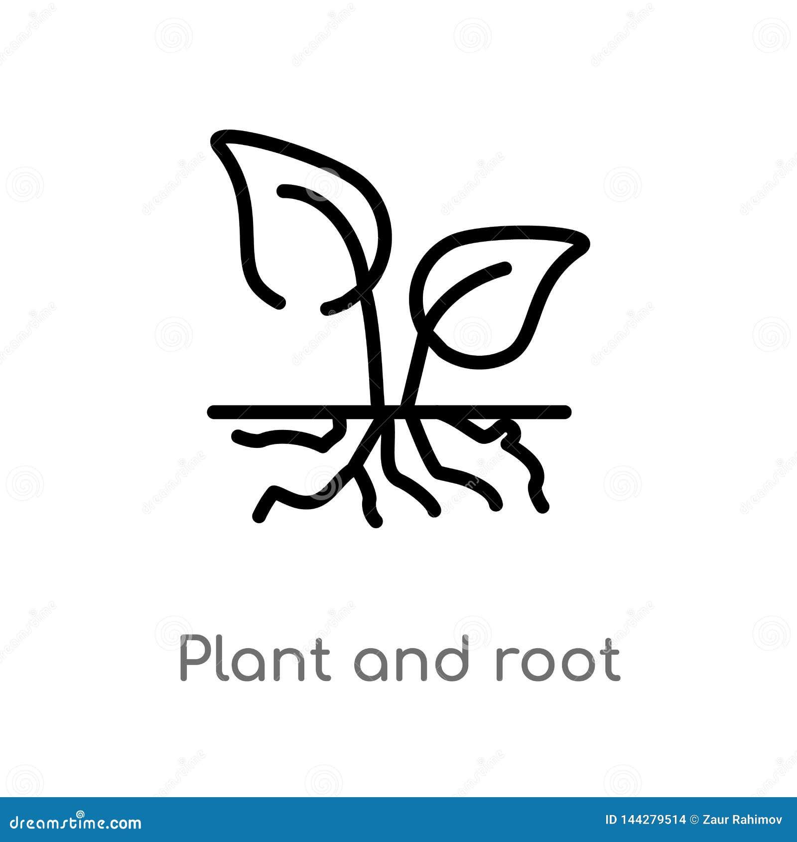 Planta del esquema e icono del vector de la raíz línea simple negra aislada ejemplo del elemento del concepto de la ecología Movi