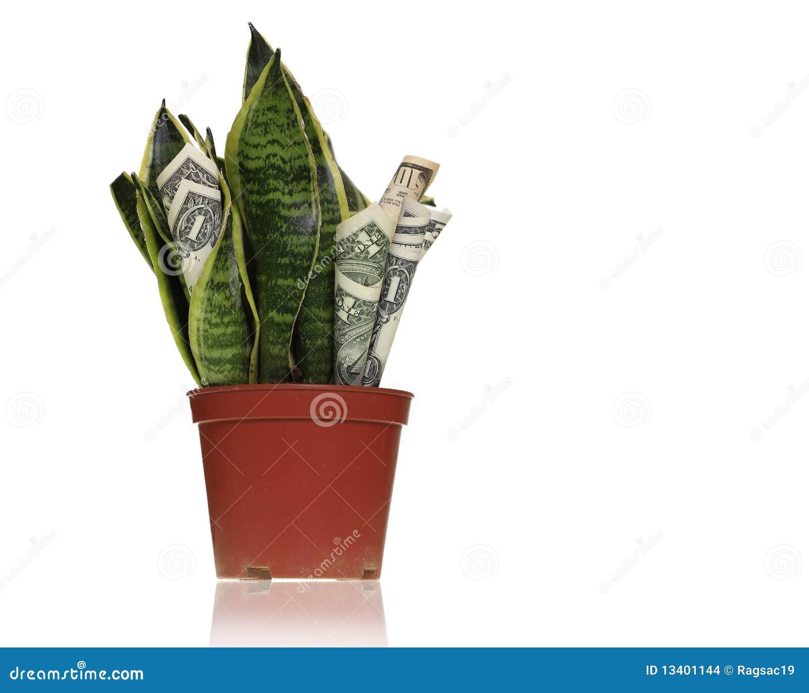 Planta del fabricante de dinero imagenes de archivo - Cosas para atraer el dinero ...