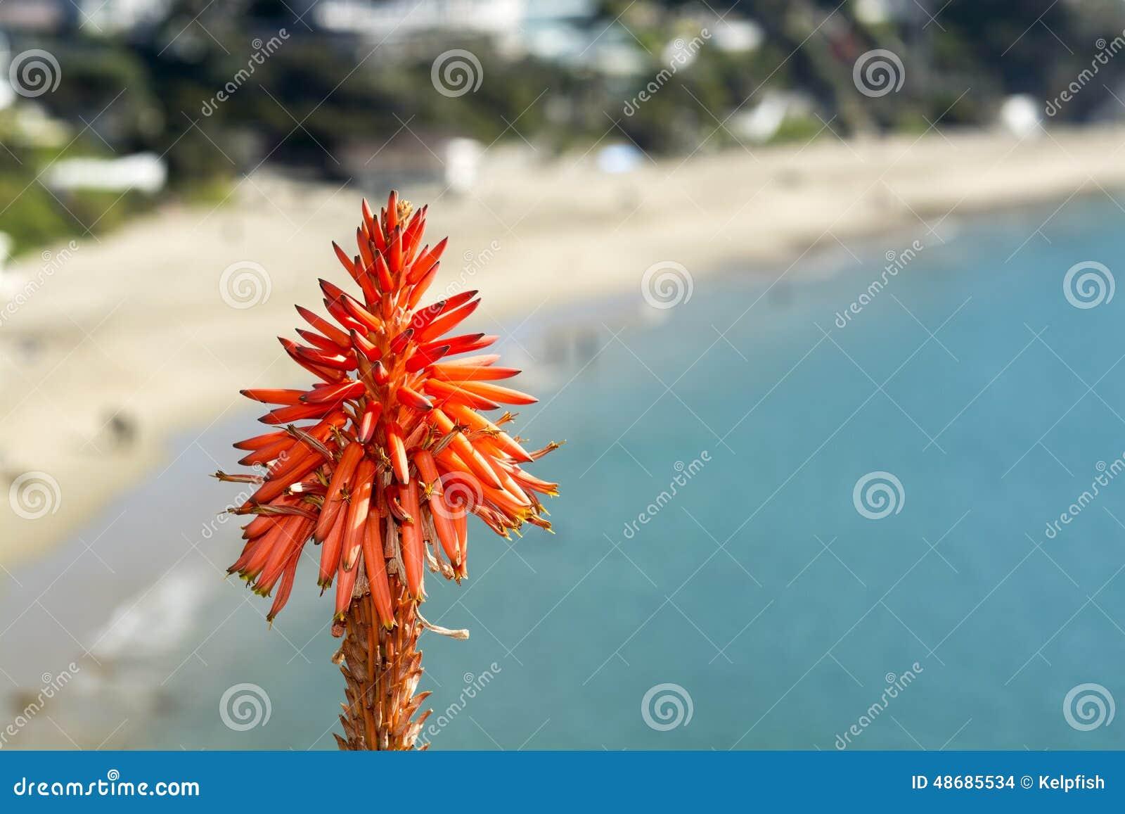 Planta do aloés sobre o oceano