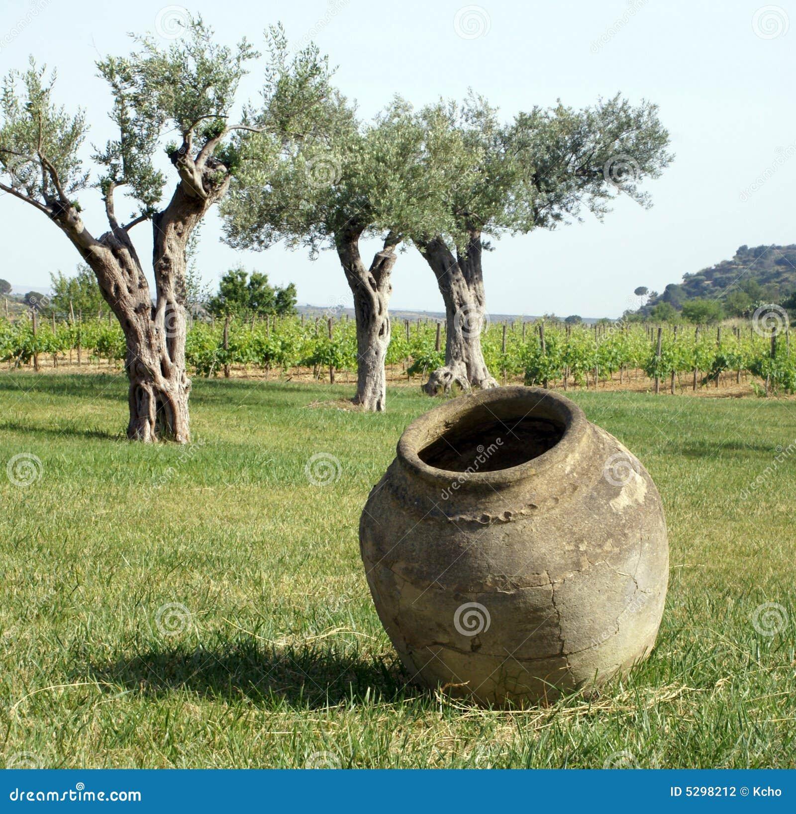 Planta do frasco e do vinho