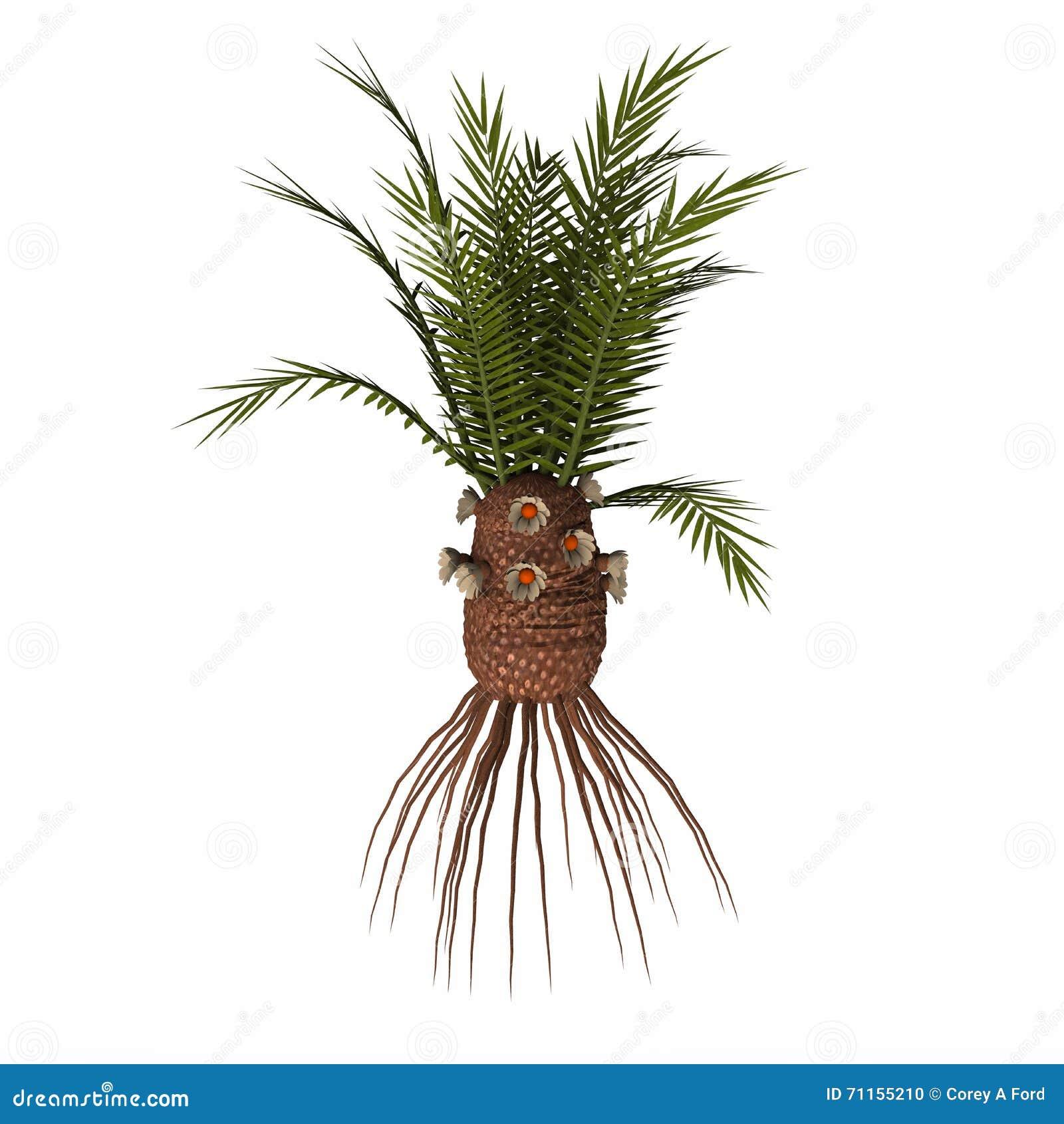Planta do gigantea de Cycadeoidea