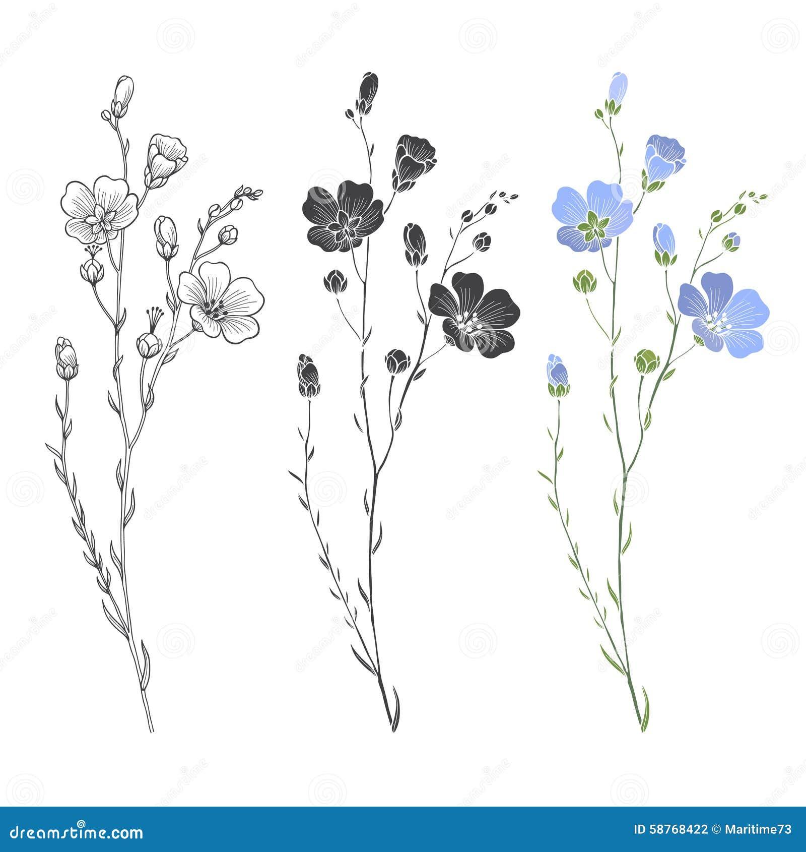 Planta do linho com flores e botões