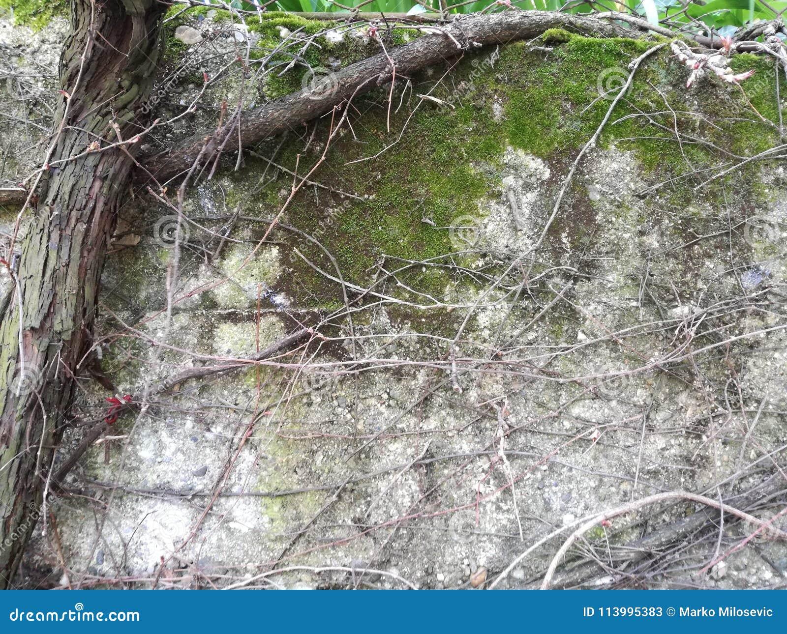 Planta e musgo da trepadeira
