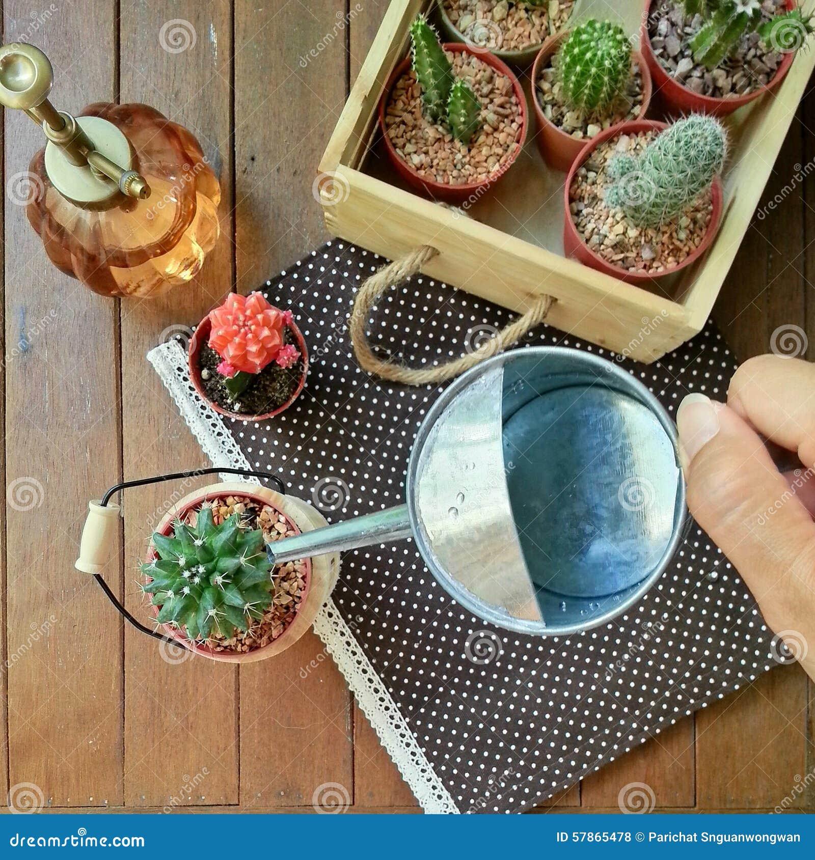 cactus riego